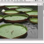 Top 5 Favorite Features for Photographers in Photoshop CC (by Terry White)