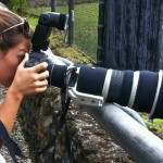 Bird and Wildlife Photography Gear Guide and Tips