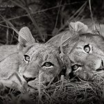 Andy Biggs: the LIfe of a Wildlife Photographer