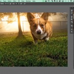 How to Make Colors in Your Image Come to Life in Photoshop