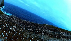 Amazing! Bird steals egg camera & films penguin colony from the air