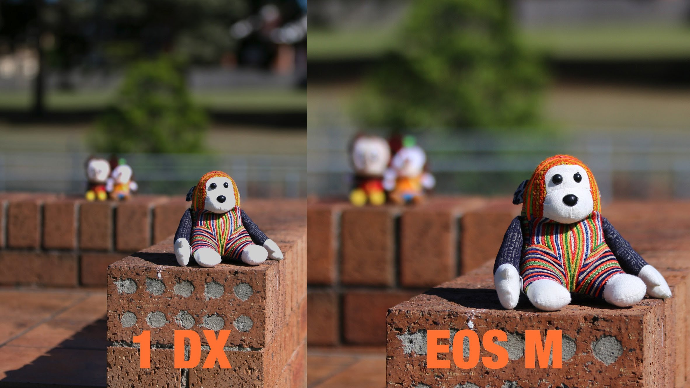 Why Depth Of Field Is Not Effected By Sensor Size A