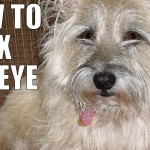 How to Fix Pet Eyes in Photoshop
