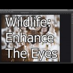 Quick Tip: Enhancing Wildlife Eyes in Photoshop