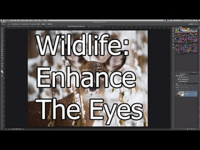 Wildlife Photography: Enhance The Eyes