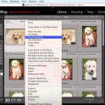 Using the Duplicate Finder Plugin to Eliminate Duplicates in Lightroom