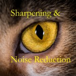 Sharpening and Noise Reduction in Lightroom 6