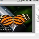 Adding a Watermark to an Image in Lightroom