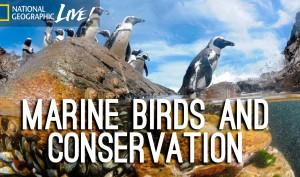 Photographing our Seas: Marine Birds and Conservation - Nat Geo Live