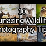 10 Simple Yet Powerful Wildlife Photography Tips