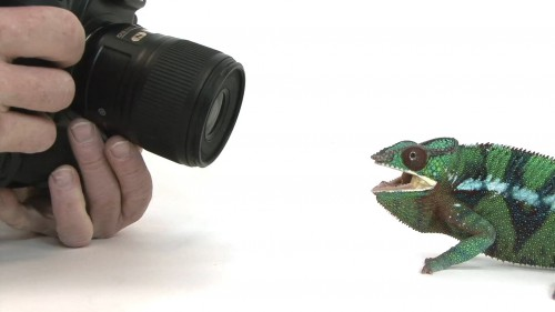 Watch-Photographing-12000-Animals-Is-Hard-Work