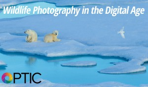 Optic-2016-Wildlife-Photography-in-the-Digital-Age-with-Ralph-Lee-Hopkins