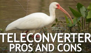 Teleconverter-Pros-and-Cons
