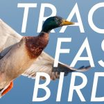 Back to Basics: Bird Photography Tips