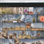 Introduction to Lightroom Web