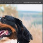Photoshop Sneak Peek: New Object Selection Tool (October 2019)