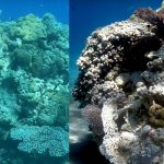 New Algorithm Recovers Color Clarity from Underwater Photos